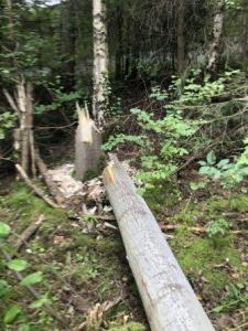 Einsatz THL Baum 21 08 2020 03