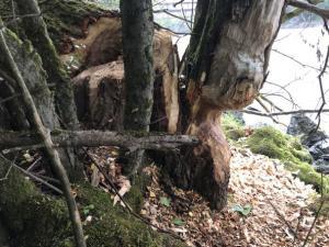 Einsatz THL Baum 21 08 2020 12